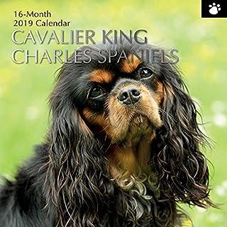 2019 Cavalier King Charles Spaniels - 12 x 12 Wall Calendar