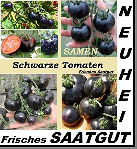 25x Schwarzen-Tomaten Samen Pflanze essbar lecker Gemüse Samen Garten #195