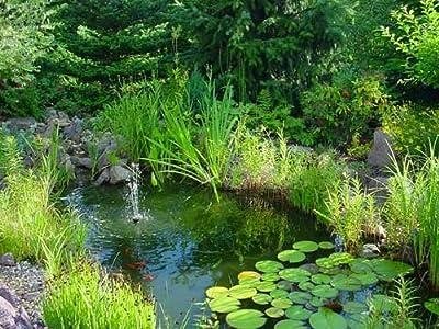 Teich - Set, über 60 Teichpflanzen, 11 Sorten von aquariumpflanzen.net - Du und dein Garten