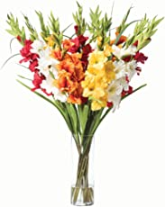 SLRIPL | Gladiolus Iris (Sword Lily) | Flower Bulbs/Corms (Not Seeds) | Indoor/Outdoor Garden | Mix (Hybrid) | Pack of 10 Pieces