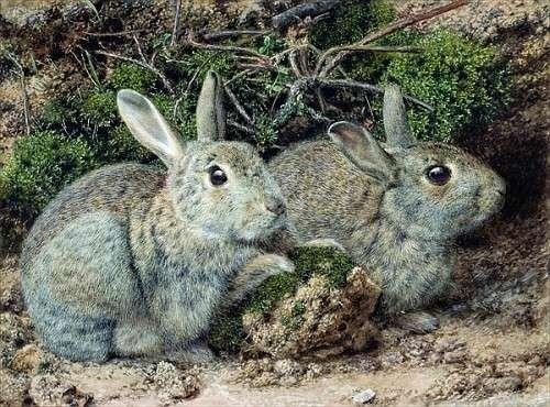 image-encadre-john-sherrin-rabbits-impression-dart-dcorative-en-cadre-de-haute-qualit-90x65-cm-dor-b