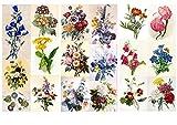 Papier fur Scrapbooking und Decoupage (12 blatt 20x30cm) Blumen Redoute Wildblumen FLONZ Vintage