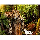 Fototapeten Leopard Afrika 352 x 250 cm Vlies Wand Tapete Wohnzimmer Schlafzimmer Büro Flur Dekoration Wandbilder XXL Moderne Wanddeko - 100% MADE IN GERMANY - Runa Tapeten 9201011a