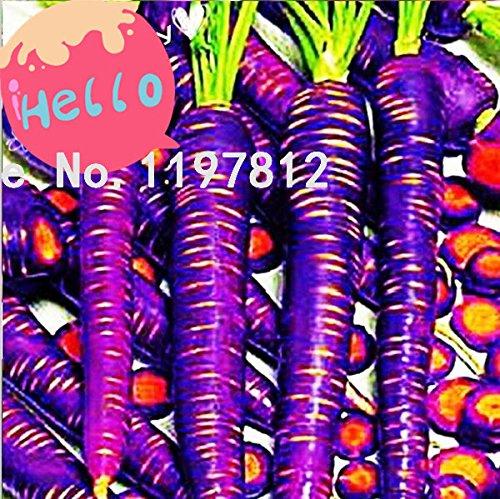 200 pc/sac de semences de carottes Violet du dragon - strictement Unique . Graines de semences de légume carotte fruits de poids