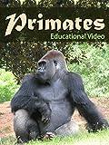 Primates [OV]