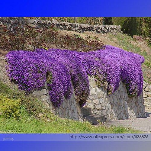 100-transparent-semi-di-fiore-delicato-fai-da-te-giardino-fiorito-i-petali-girano-trasparente-con-la