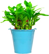 Trust Basket Metal Lucky Bamboo Planter with Bucket (Blue)