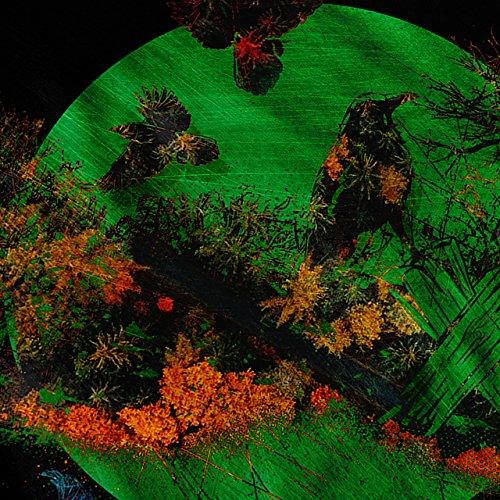 Vogel Freiheit Leben Natur Herbst Farbe Damen S-2XL Muskelshirt | Wellcoda Schwarz