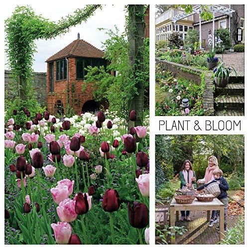 plant & bloom - bulbi da fiore, tulipani dall'olanda - 30 bulbi, semina autunnale, facile da coltivare, fioritura primaverile - rossi, rosa e bianchi - qualità superiore olandese