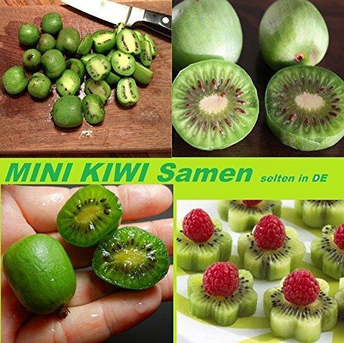 15x MINI Kiwi Selbstbefruchtend Samen Hingucker Pflanze Garten Selten Rarität Obst #204