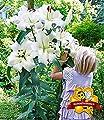 MyRedRose Tree-Lily Pretty Woman 3 Stück Baumlilien Lilium von MyRedRose - Du und dein Garten