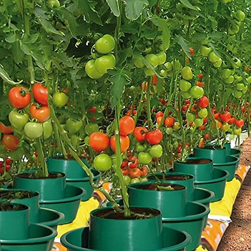 garden-innovations-tomaten-pflanzenbeutel-3-stuck