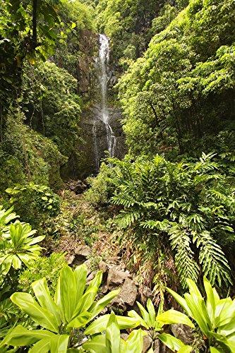 The Poster Corp Ron Dahlquist/Design Pics - Hawaii Maui Kipahulu Hana Coast Wailua Falls Surrounded by Foliage. Photo Print (60,96 x 91,44 cm)