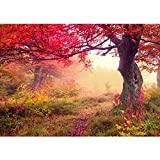 Vlies Fototapete PREMIUM PLUS Wand Foto Tapete Wand Bild Vliestapete - Wald Bäume Herbst - no. 258 Wald Bäume Herbst Natur Sonne, Größe:350x245cm Vlies