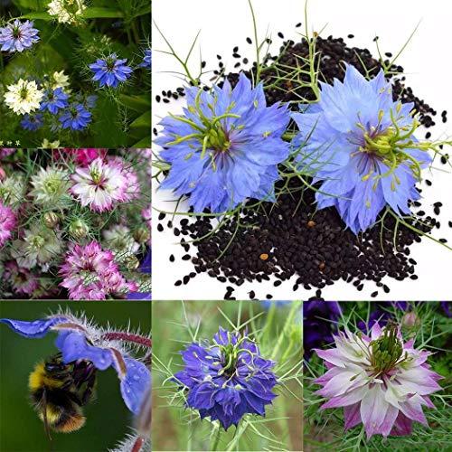 Tomasa Samenhaus- 30 Stück Rarität Schwarzkümmel Zierpflanzen, Nigella Damascena Seeds Blumensamen Saatgut winterhart mehrjährig Blumen für Garten Terrasse