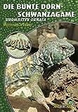 Die Bunte Dornschwanzagame: Uromastyx Ornata (Art für Art)