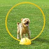 Kombi-X-Fuß mit Kombi-Ring 70 cm, in 4 Farben, für Agility - Hundetraining (gelb)