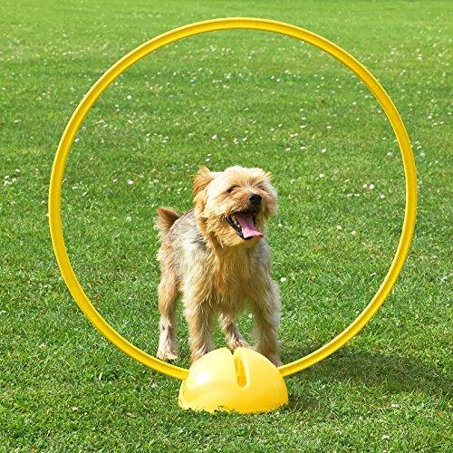 Superhund24 Kombi-X-Fuß mit Kombi-Ring 70 cm, in 4 Far… | 04260337373246