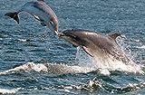 JP London spmur2141Abziehen & Aufkleben Abnehmbare Wand Wandbild Delfin Kiss San Francisco Bay Ocean Waves bei