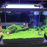 Tradico® 1000X Bulk Aquariums Mixed Grass Seeds Water Aquatic Home Fish Tank Plant Deco