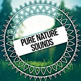 Pure Nature Sounds – Ambient Nature Sounds for Relaxation with Meditation, Best Streaming Music