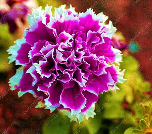 100 pcs graines de pétunia graines rares fleurs de pétunia vivaces ornementales jardin à la maison des plantes en pot graines bonsaï fleurs blanches