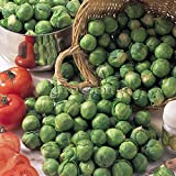 Shopmeeko SEMI: Catskill Cavoletti di Bruxelles * 1 grammo 330 & # 39; s (PCS) * Brassica oleracea * gemmifera Gruppo * di verdure Graden * insalata di verdure: 3 grammi