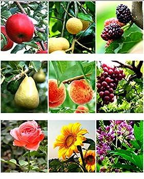 Astschere Scheren Bypass Hohe Härte Pick Obst Schneiden Obstbaum Schneiden Fruit Branch Astschere Fruit Picking Scheren Garten Bonsai Werkzeuge 7