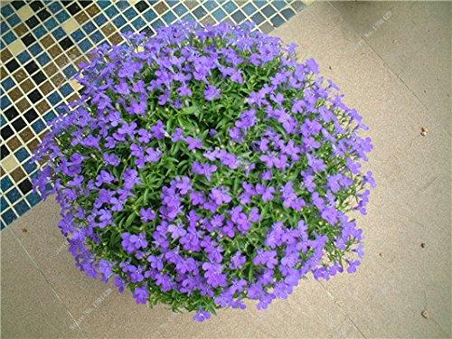Bleu Fleur de Lin Graine vivace Fleur Graine Quatre Saisons Fleur plantes ornementales tropicales en plein air Bonsai Lin Semilla 100 Pcs 8