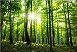 Posterlounge Acrylglasbild 90 x 60 cm: Sonnenlicht im grünen Wald, Frühling von Editors Choice - Wandbild, Acryl Glasbild, Druck auf Acryl Glas Bild