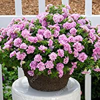100pcs / bag atractivos semillas de la petunia mixtos exóticas Bonsai Flores traer un mejor disfrute de bricolaje Hogar y jardín Plantas En los bonsais