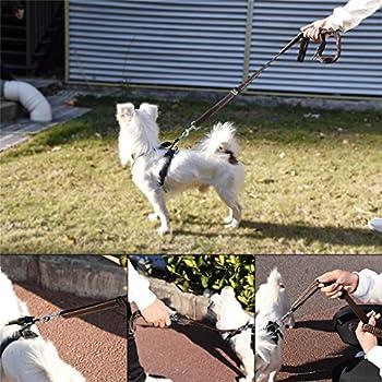 Ckeyin Reflektierende Haustier-leine, Hohe Elastische Hundeleine Haustier-autositz-sicherheitsgurt-einziehbare Tracti Auf Sicherheitsseil 5