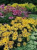 Staude Gelber Sonnenhut. 5 Stauden - zu dem Artikel bekommen Sie gratis ein Paar Handschuhe für die Gartenarbeit dazu