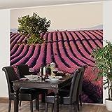 Apalis Vliestapete Küchentapete Lavender Fototapete Quadrat | Vlies Tapete  Wandtapete Wandbild Foto 3D Fototapete Für Schlafzimmer