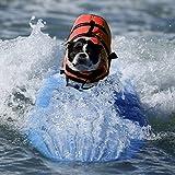 Poppypet Hundeschwimmweste Doggy Aqua-Top Schwimmweste Schwimmtraining für Hunde Orange M - 8