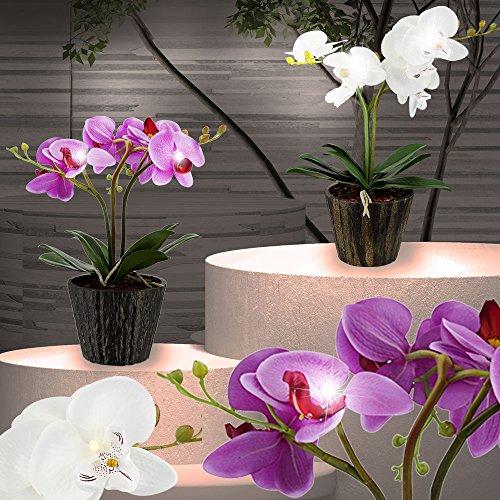 LED Orchidee Blumentopf Pflanze Beleuchtung Blume Blüten Blätter Globo 28003 - 3