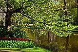 Wallario Poster - Bunte Blumen im Park am Wasser - Frühblüher am Ufer in Premiumqualität, Größe: 61 x 91,5 cm (Maxiposter)