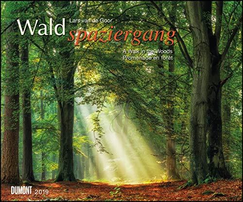Waldspaziergang 2019 – Fotokunst-Kalender – Querformat 58,4 x 48,5 cm – Spiralbindung