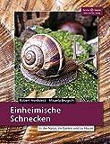 Einheimische Schnecken: In der Natur, im Garten und zu Hause (Terrarien-Bibliothek)