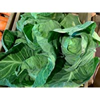 Autumn/Winter Vegetable Plants - Cabbage 'Hispi' - 12 x Plant Pack - Available Now!
