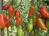 Seltene Tomatensamen Alyye Svechi - Scarlet Kerzen Russisch Erbstück NON-GMO