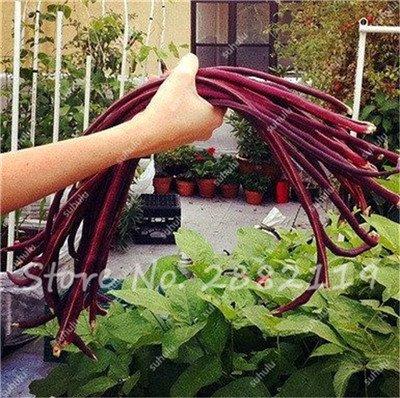 10 Pcs Multi Color long haricots Graines santé Graines de légumes biologiques, la croissance naturelle pour jardin délicieux Bon savoureux 6