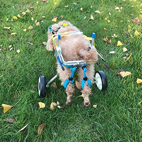 61fpqrTYn1L - Teabelle - Silla de Ruedas Ajustable para Perro, para rehabilitación de piernas para Perros pequeños con minusvalía, Perros y Cachorros (2 Ruedas)