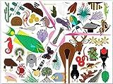 Charley Harper's Animal Kingdom : Popular Edition