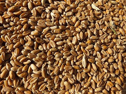 Weizen (ganz) 10 kg - frisch und direkt aus der Mühle