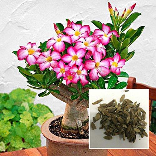 Rosepoem 50 pz / borsa semi di bonsai adenium obesum rosa del deserto perenne fornitura di fiori fai da te