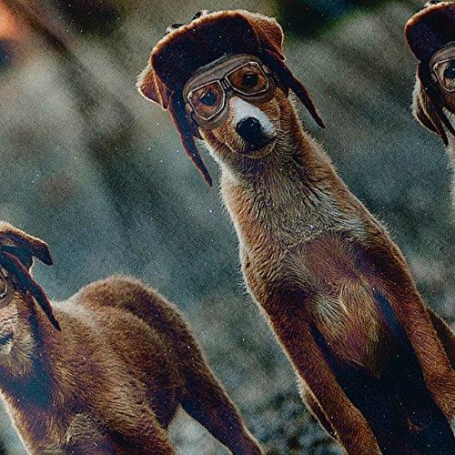 Hund Gruppe Freunde Tier Hündchen Crew Damen S-2XL Muskelshirt | Wellcoda Grau