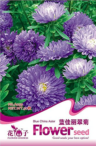 1 Original Pack, 50 graines / paquet, Callistephus chinensis Chine Aster Duchess Blue Ice annuel Seeds # A059