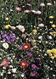 Tropica - Wildblumen - Südtirol - Alpenglühen (10 Sorten) - 1000 Samen