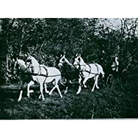 Vintage photo of Lilian Harvey seen riding a horse carriage.